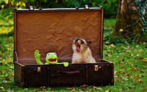 Plus-Size Travel News suitcase